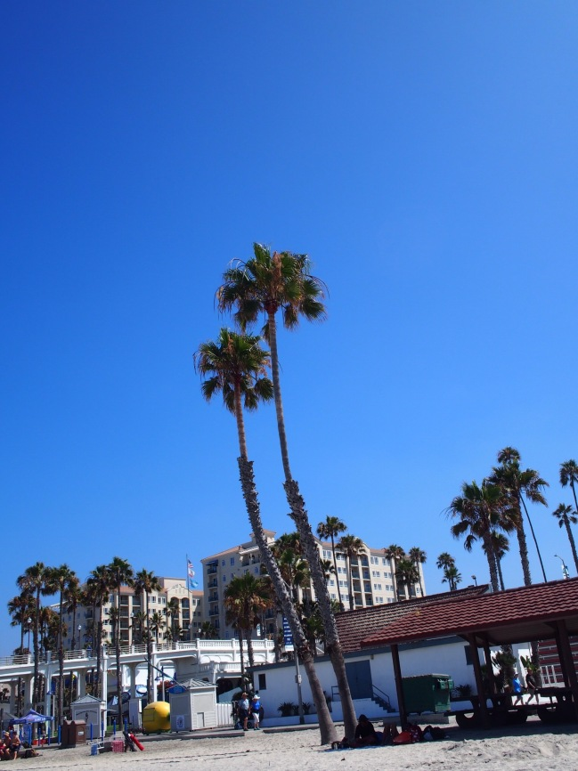 Palm trees on palm trees on palm trees!- Oceanside Pier