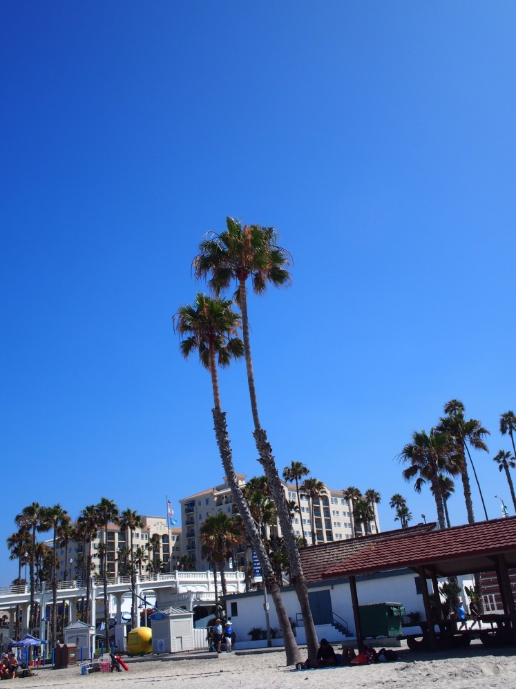 Palm trees on palm trees on palm trees!- Oceanside Pier
