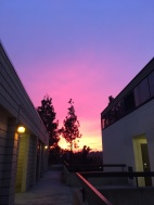 Gradient pink-purple skies making finals a lot better