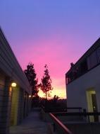 Gradient pink-purple skies making finals a lot better