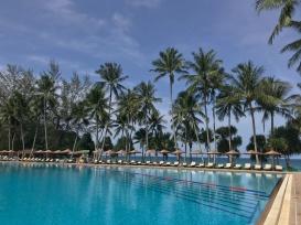 Palm trees and palm trees and palm trees oh my!// Phuket, Thailand