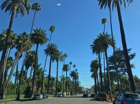 Iconic view of palm tree lined LA streets // Beverly Hills, Los Angeles